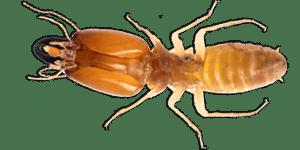 Termite Pest Control Sydney