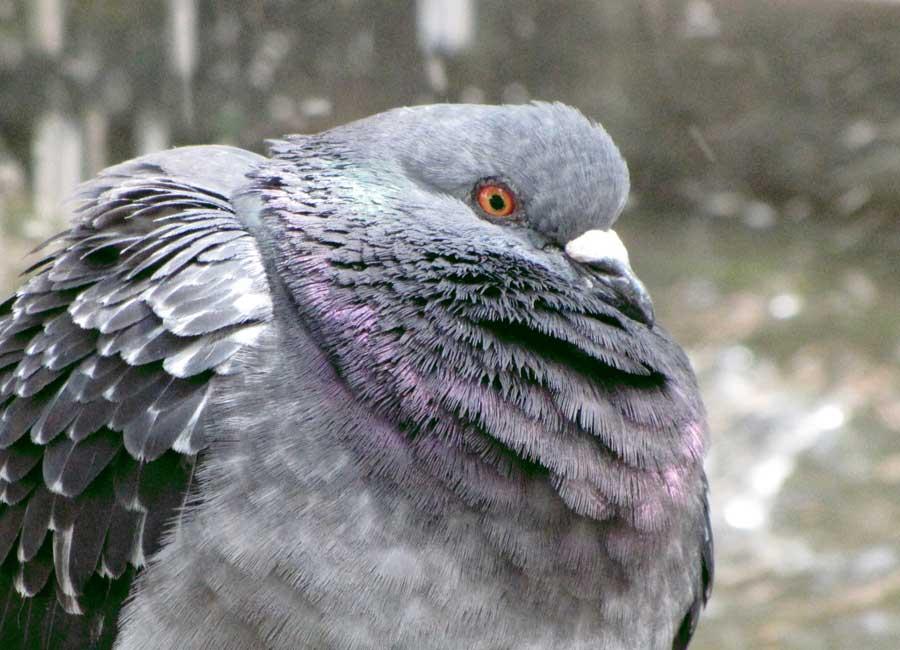 Bird Solutions