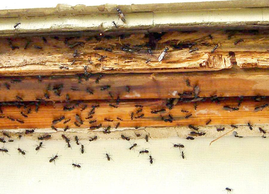 how to get rid of thousand legger bugs