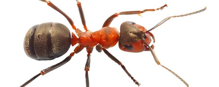 Knockout-Pests-Ants_1