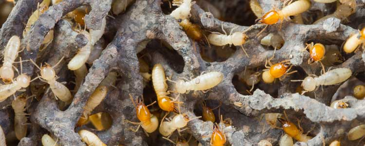 Knockout-Pests-First-Signs-Of-Termites