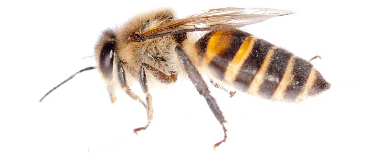 Knockout-first-signs-of-bees