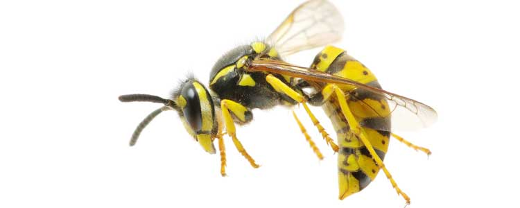 Knockout-first-signs-of-wasps