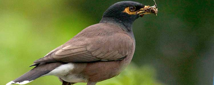 Knockout-pests-First-signs-of-birds