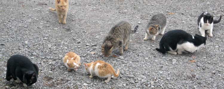 Knockout-pests-First-signs-of-feral-cats