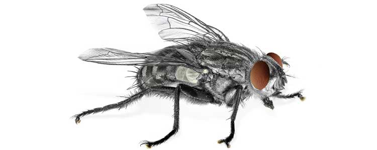 Knockout-pests-flies-1