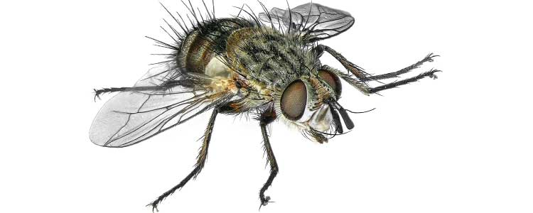 Knockout-pests-flies-2
