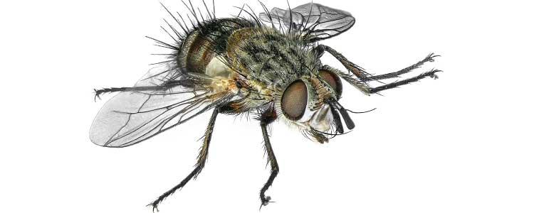 Knockout-pests-flies-2