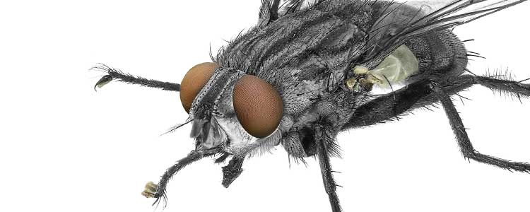 Knockout-pests-flies-3