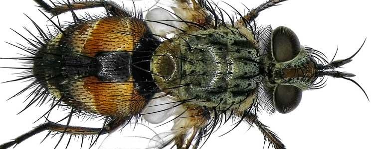 Knockout-pests-flies-4