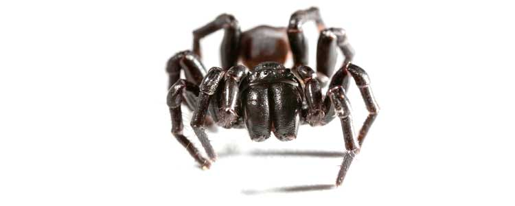 Knockout-pests-spiders-3