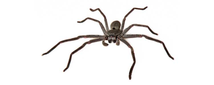 Knockout-pests-spiders-4