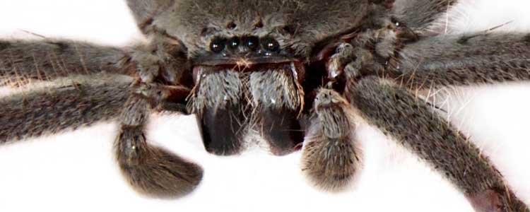 Knockout-pests-spiders-5