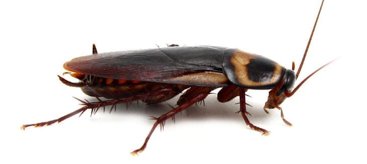 How Much Does Pest Control Cost Bed Bugs