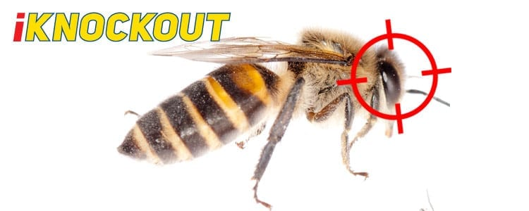 Knockout-pest-control-IKnockout-Pests-Get-Rid-of-Bees-wasps-1