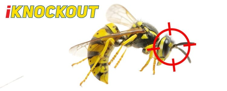 Knockout-pest-control-IKnockout-Pests-Get-Rid-of-Bees-wasps-2