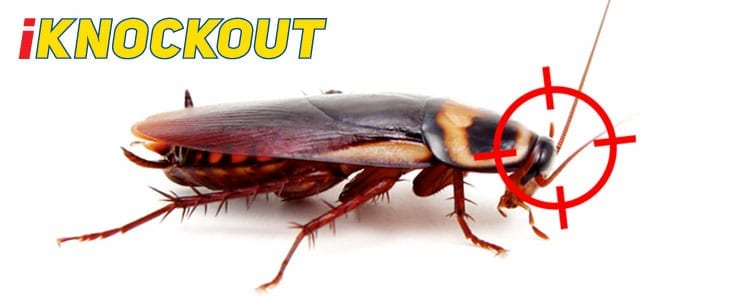 Knockout-pest-control-IKnockout-Pests-Get-Rid-of-Cockroaches-1