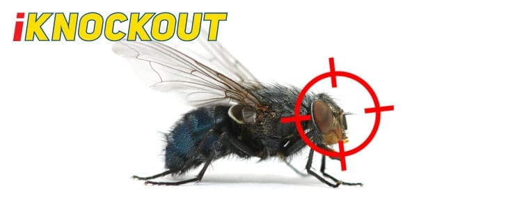 Knockout-pest-control-IKnockout-Pests-Get-Rid-of-Flies-1