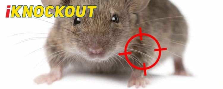 Knockout-pest-control-IKnockout-Pests-Get-Rid-of-Mice-1