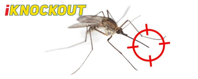 Knockout-pest-control-IKnockout-Pests-Get-Rid-of-Mosquitoes-Midges-1