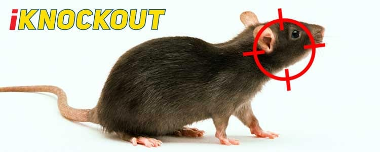 Knockout-pest-control-IKnockout-Pests-Get-Rid-of-Rats-2