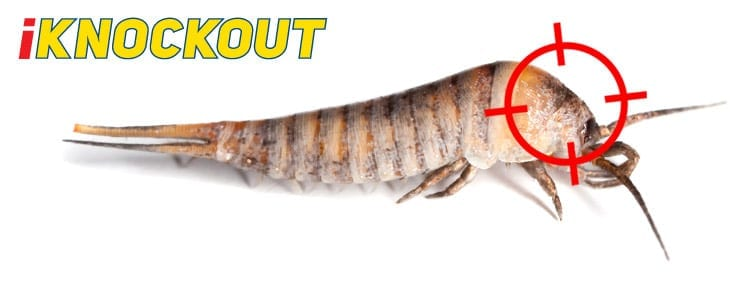 Knockout-pest-control-IKnockout-Pests-Get-Rid-of-Silverfish-1