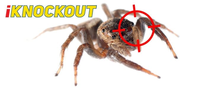 Knockout-pest-control-IKnockout-Pests-Get-Rid-of-Spiders-1