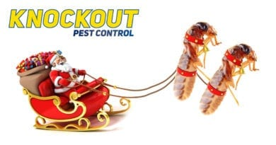 knockout-pest-control-xmas-2